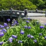 円山公園 5月