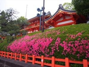 八坂神社 5月14日
