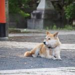 県神社のぺぺ