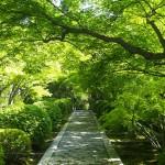 新緑の一休寺