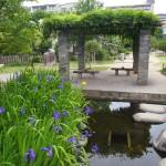 桜井公園にて