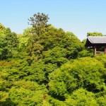 東福寺の緑