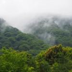 天龍寺からの嵐山