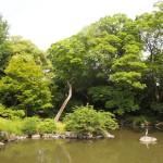 京都御苑 九条池