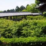 東福寺 方丈から望む通天橋