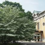 京都市美術館 5月