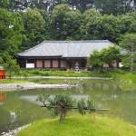 浄瑠璃寺 5月