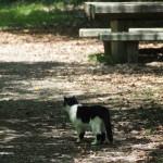 山科疏水の猫