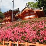 八坂神社 5月