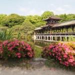 平安神宮 サツキ
