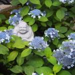 霊源院 甘茶の庭