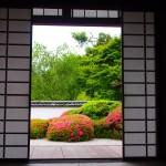 サツキ咲く正伝寺