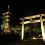 仁和寺 ライトアップ 6月