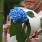 藤森神社 紫陽花の枝と鞠