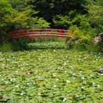 大原野神社 6月