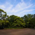 早朝の京都御苑