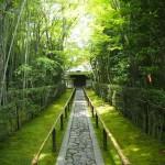 大徳寺 高桐院 6月