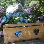 楊谷寺 紫陽花とベンチ