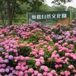 舞鶴自然文化園 7月