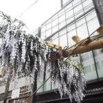 祇園祭 菊水鉾の鉾建て 7月