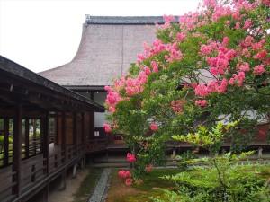 大覚寺のサルスベリ