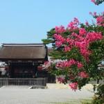 京都御苑のサルスベリ