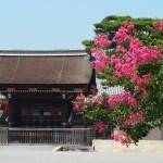 京都御苑 8月