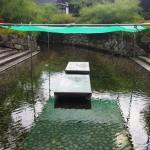 下鴨神社 御手洗池