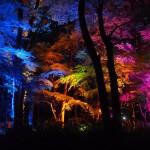 下鴨神社 糺の森の光の祭 8月