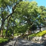 青蓮院への道