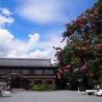 仏光寺のサルスベリ
