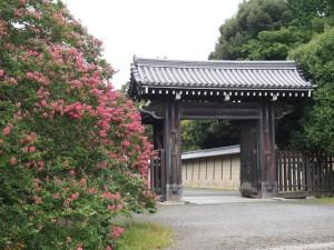 寺町御門とサルスベリ