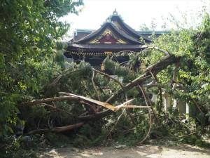 台風21号の被害 北野天満宮