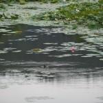 大覚寺 五大堂から望む大沢池