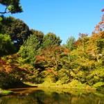 高台寺 臥龍池と楓