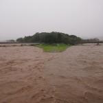 激しく増水した鴨川 出町柳