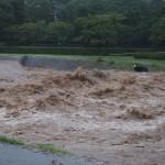 激しく増水した賀茂川