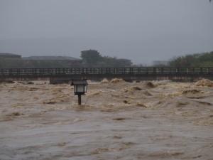激しく増水した桂川と渡月橋