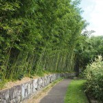 洛西竹林公園