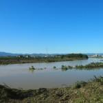 鴨川・桂川合流点 写真の範囲は向こう岸まで水だった