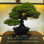 徳川慶喜が愛でたという盆栽