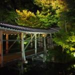 高台寺 夜間拝観