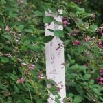 梨木神社 萩まつり 9月