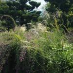 常林寺 萩と薄