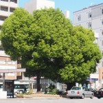 ハート形の木 9月