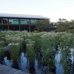 梅小路公園 藤袴と和の花展