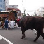 ずいき祭 還幸祭 牛車