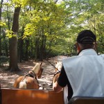 下鴨神社の遊覧馬車