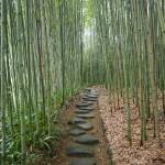 洛西竹林公園 10月