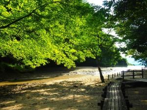 京都 緑を楽しむ秋
